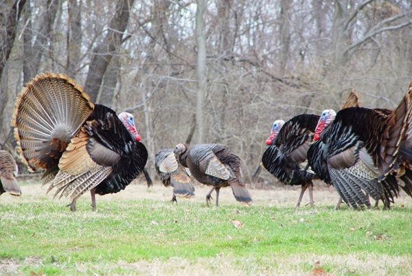 5K Turkey Trot and Fun Run at Tenafly Nature Center