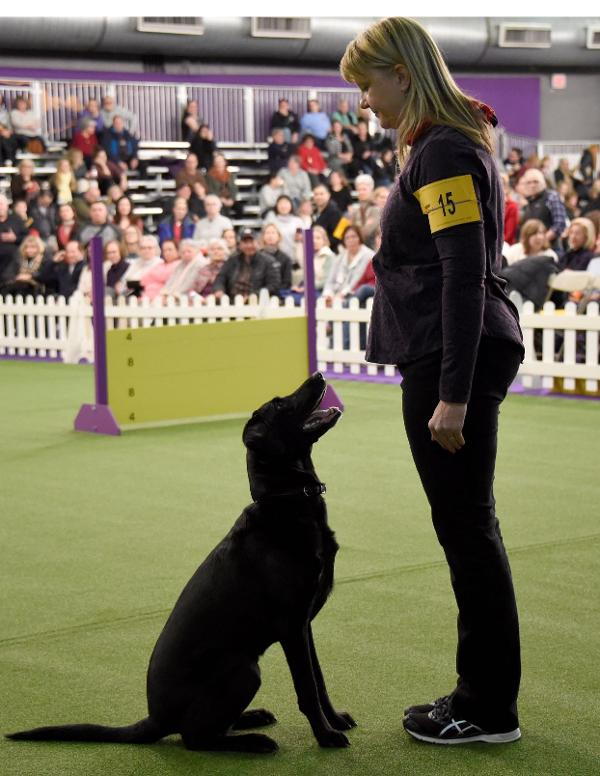 5th Masters Obedience Championship at Westminster at Pier 94