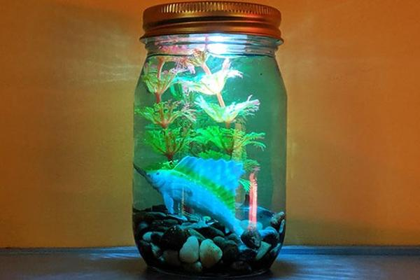 All About Aquariums at Long Island Children's Museum
