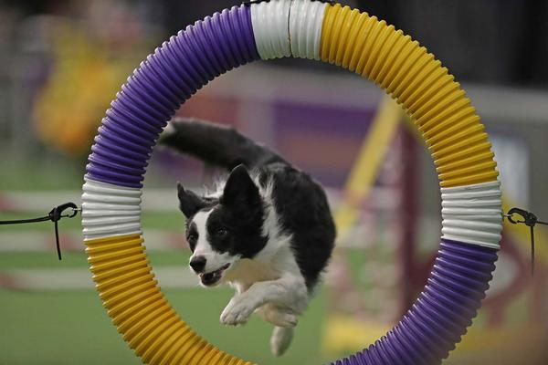 The Westminster Kennel Club presents Westminster Week 2018 at Piers 92/94 and Madison Square Garden