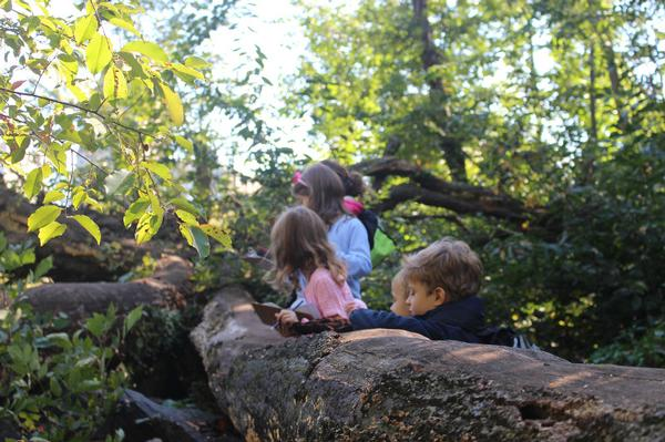 Central Park Discovery Walk for Families: The North Woods at Charles A. Dana Discovery Center