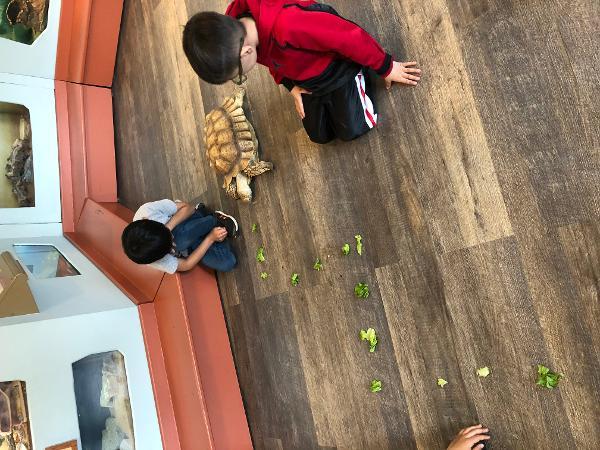 Feeding Fun at Greenburgh Nature Center
