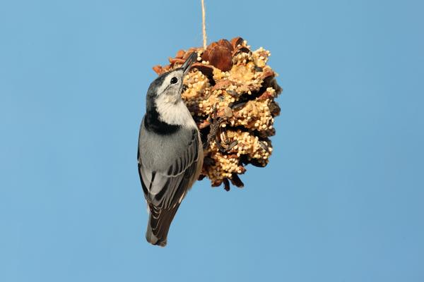 Create a Birdfeeder at Hicks Nurseries