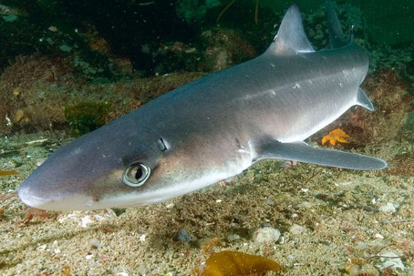 Calling Young Scientists: Shark Senses at Long Island Children's Museum