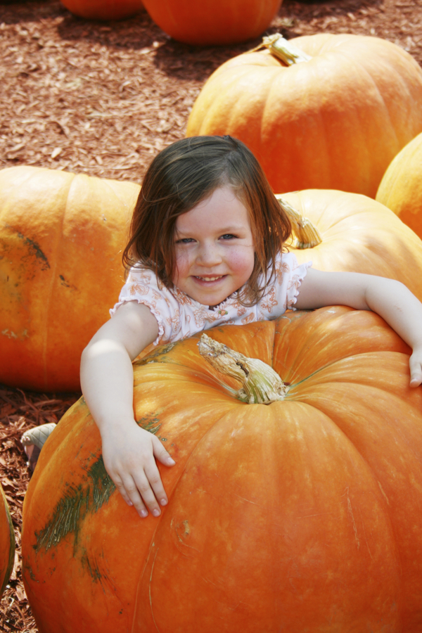 Fall Harvest and Giant Pumpkin Contest at Hicks Nurseries