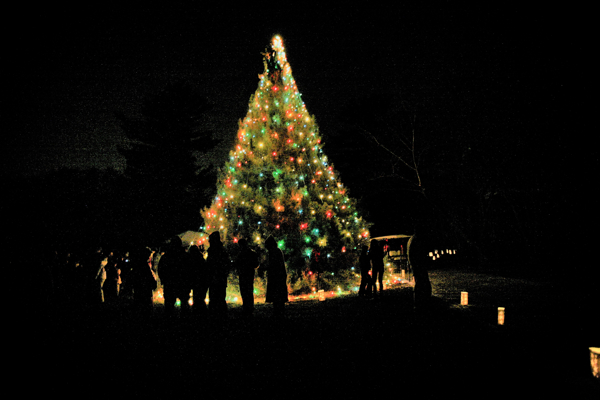 HOLIDAY TREE LIGHTING CEREMONY at Planting Fields Arboretum
