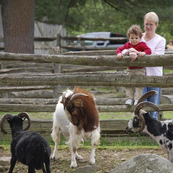 Outdoor Adventures: Heckscher Farm Evening Tour at Stamford Museum & Nature Center