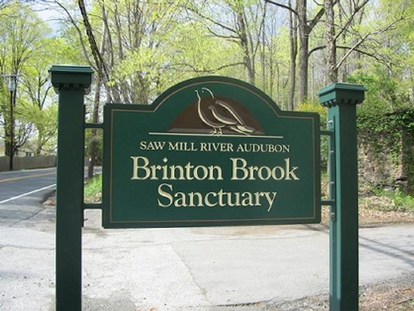Saw Mill River Audubon Second Saturday Walk at Brinton Brook Sanctuary at Brinton Brook Sanctuary
