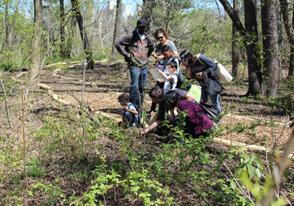 Discovery Walks for Families: Towering Trees at Loeb Boathouse Express Café