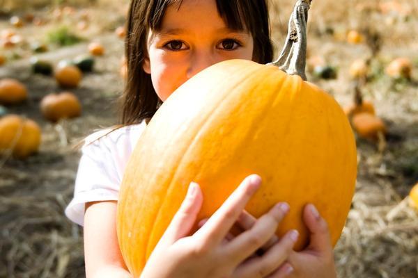 Pumpkin Picking at Historic Richmond Town, Decker Fram