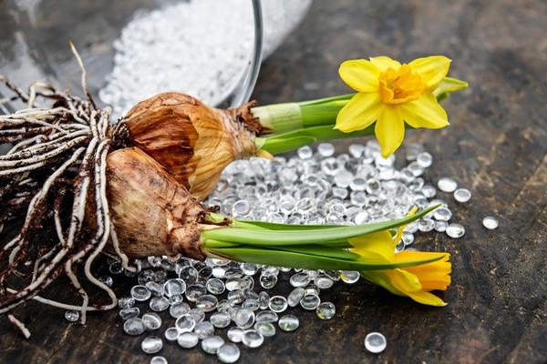 Flowering Bulbs from Spring to Fall at South Orangetown Continuing Education at Tappan Zee HS