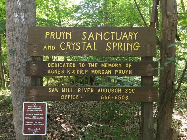 Saw Mill River Audubon Pruyn Sanctuary Spring Walk at Pruyn Sanctuary