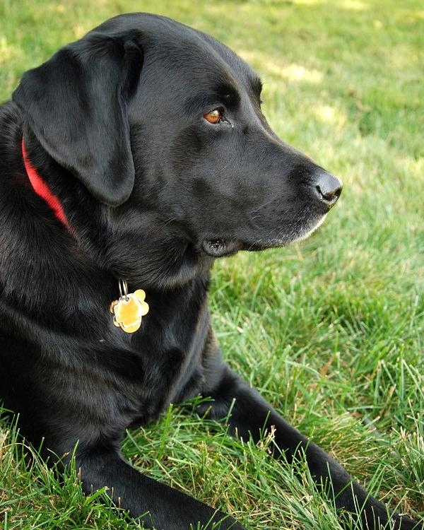 Paws for Reading with Pepper at Palisades Free Library