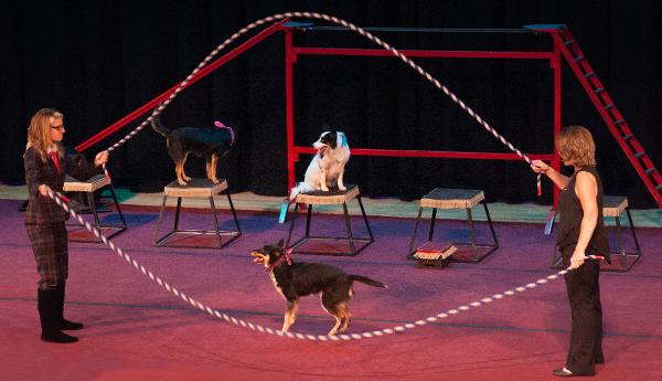 MUTTS GONE NUTS at Bergen Performing Arts Center