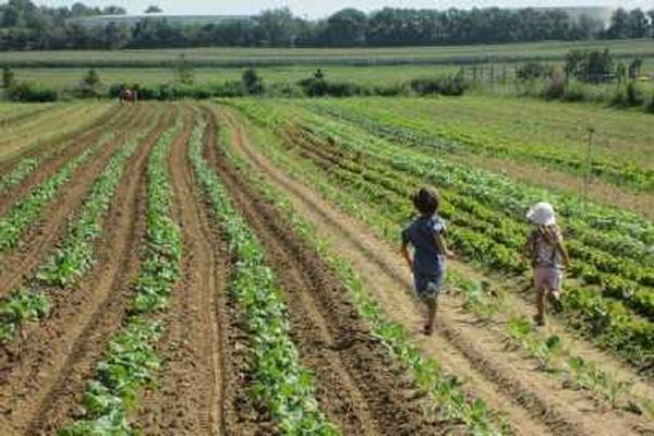 Little Farmer Explorers at Garden of Eve Farm