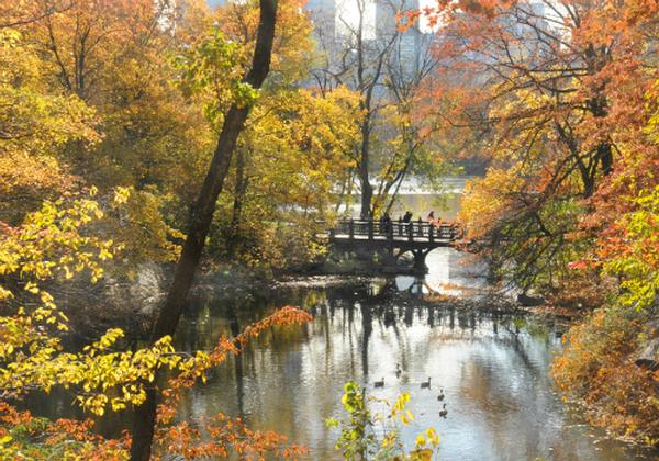 Discovery Walks for Families: Woodland Wonderland at Belvedere Castle