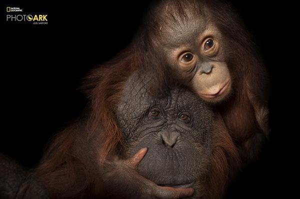 National Geographic Photo Ark by Joel Sartore at Southampton Arts Center