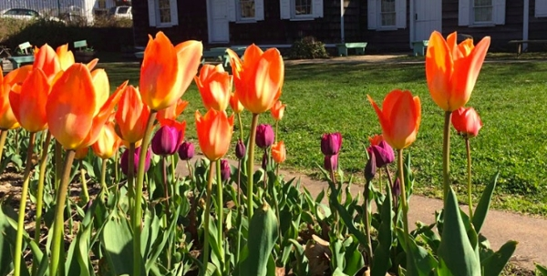 Farmhouse Family Day: Spring Sprouts and Sketches at Wyckoff House Museum