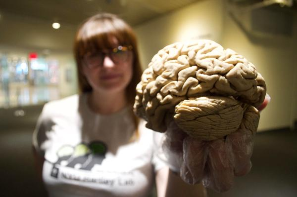 Brain Day at New York Hall of Science