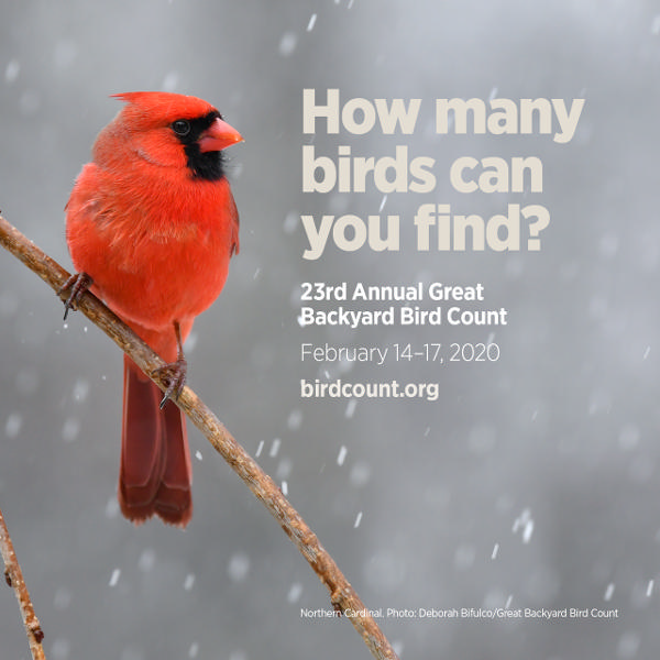 Great Backyard Bird Count at Cos Cob Library at Cos Cob Library