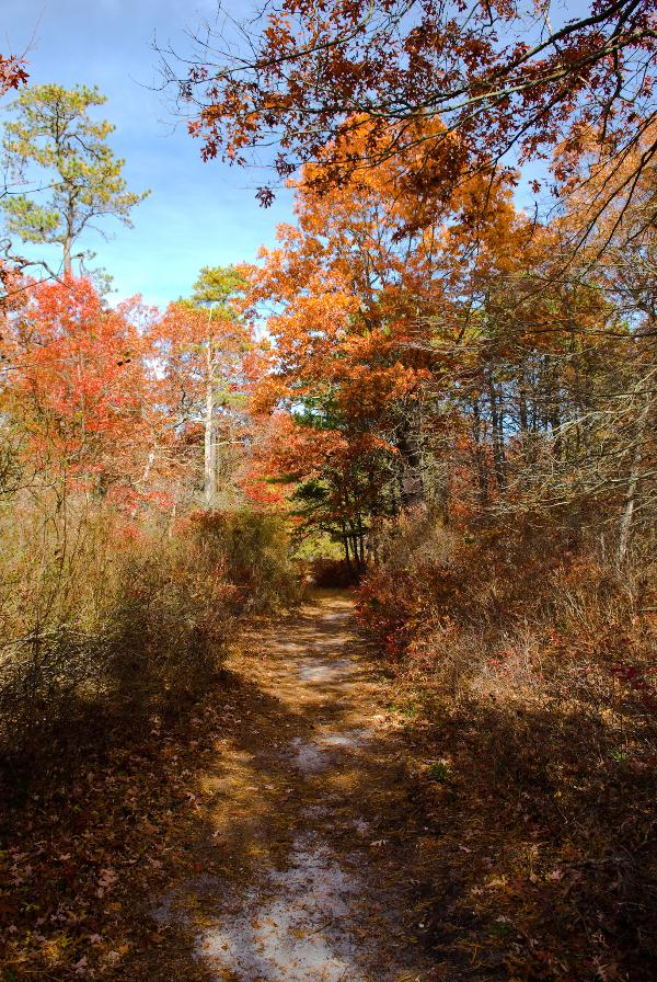Adult Program: Welcome Spring Stroll at Connetquot River State Park Preserve