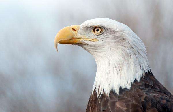 Teatown Hudson River EagleFest at Croton Point Park