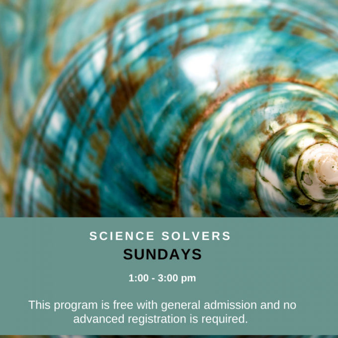 Science Solvers: Seashell Rubbing at Bruce Museum