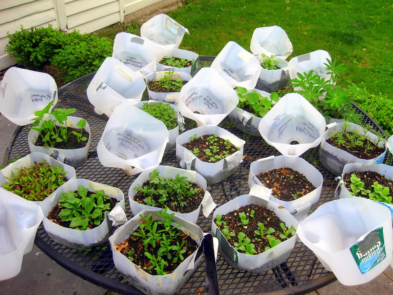 IN PERSON Winter Sowing Workshop at Cropsey Community Farm