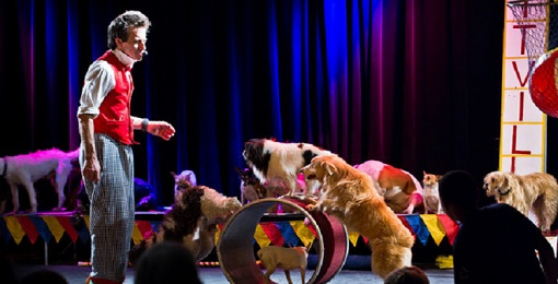 IN PERSON Johnny Peers & The Muttville Comix at The Ridgefield Playhouse