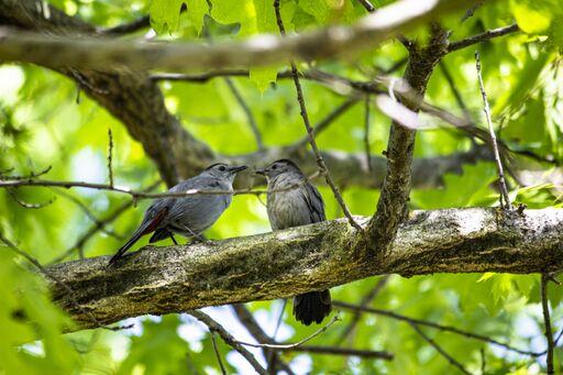 Spring Birding at Wave Hill