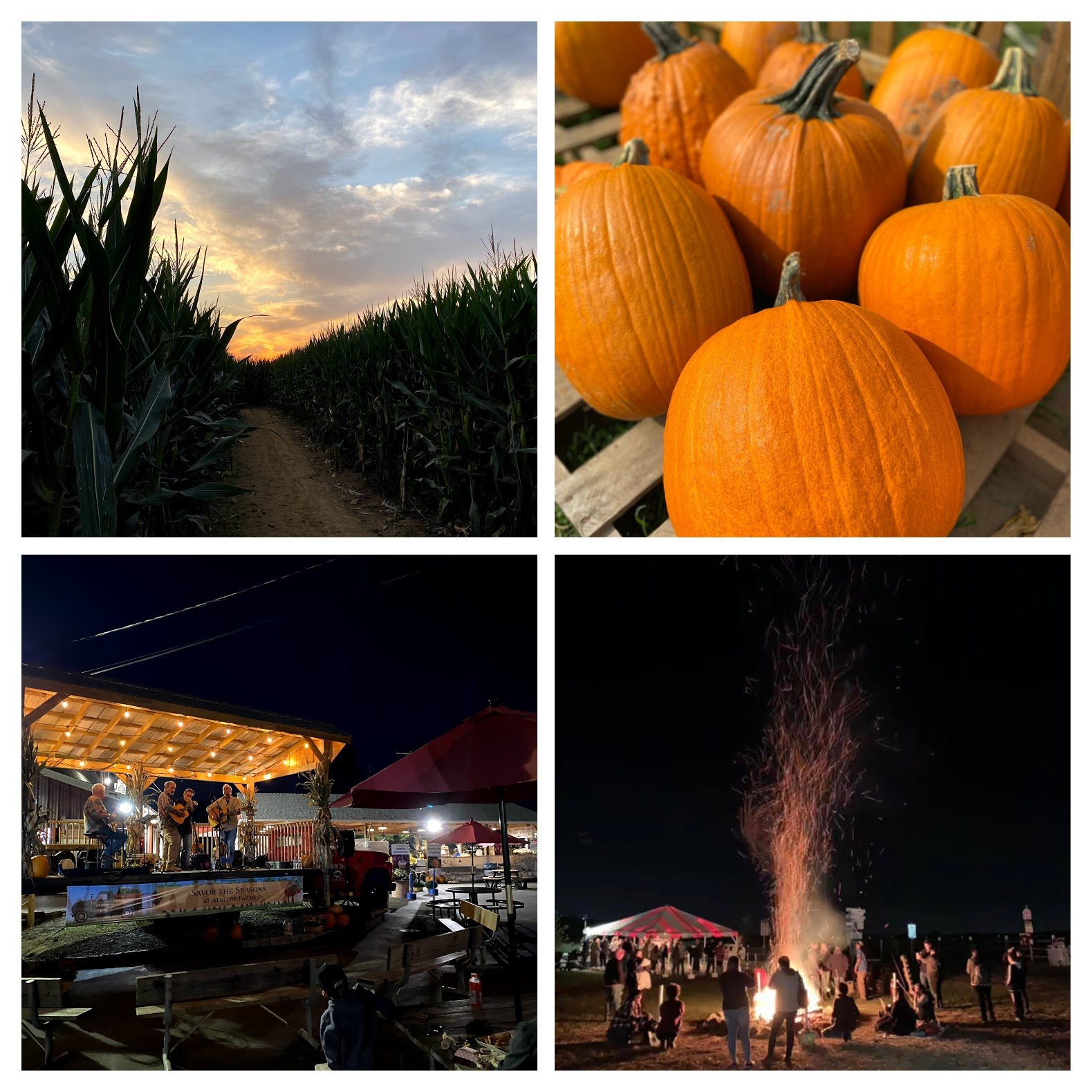 Harvest Moon Nights at Alstede Farms at Alstede Farms