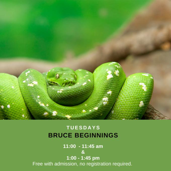 Bruce Beginnings: Snakes at Bruce Museum