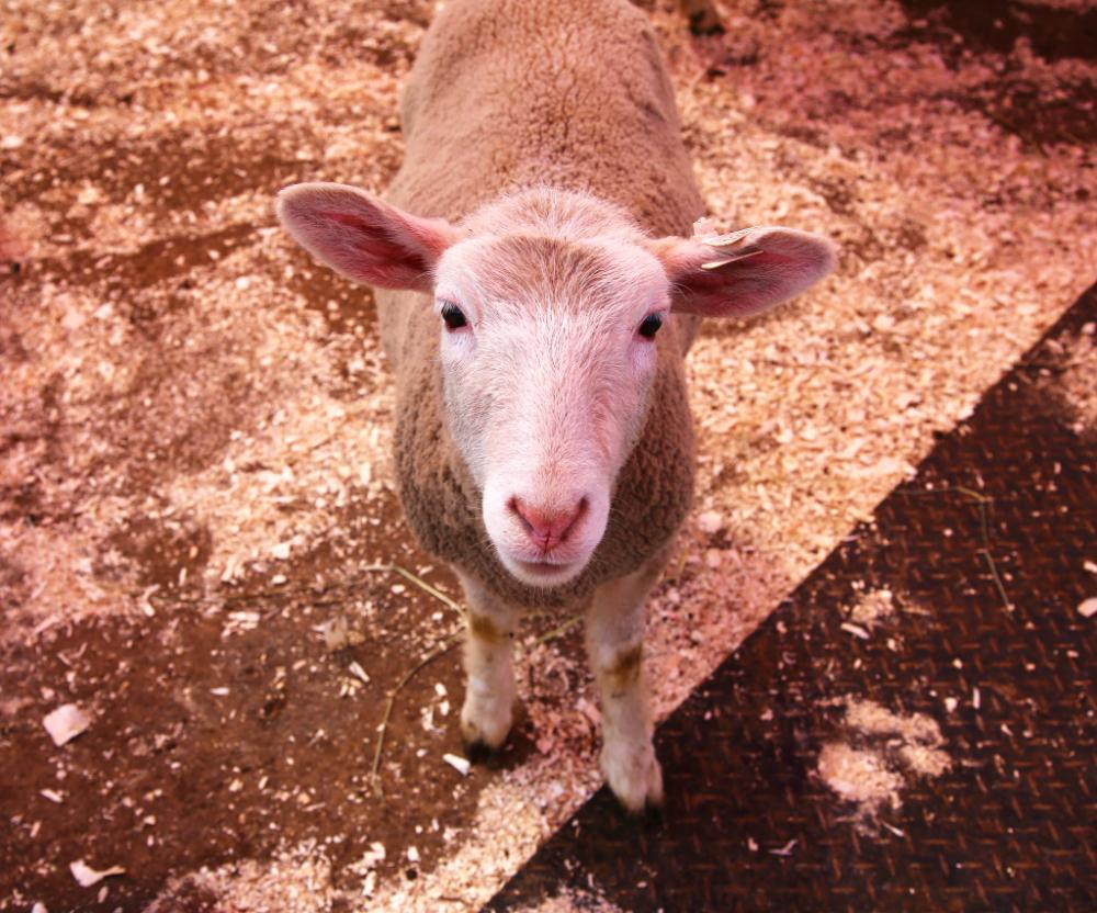 Petting Zoo Magic at Green Meadows Farm at Aviator Sports and Events Center