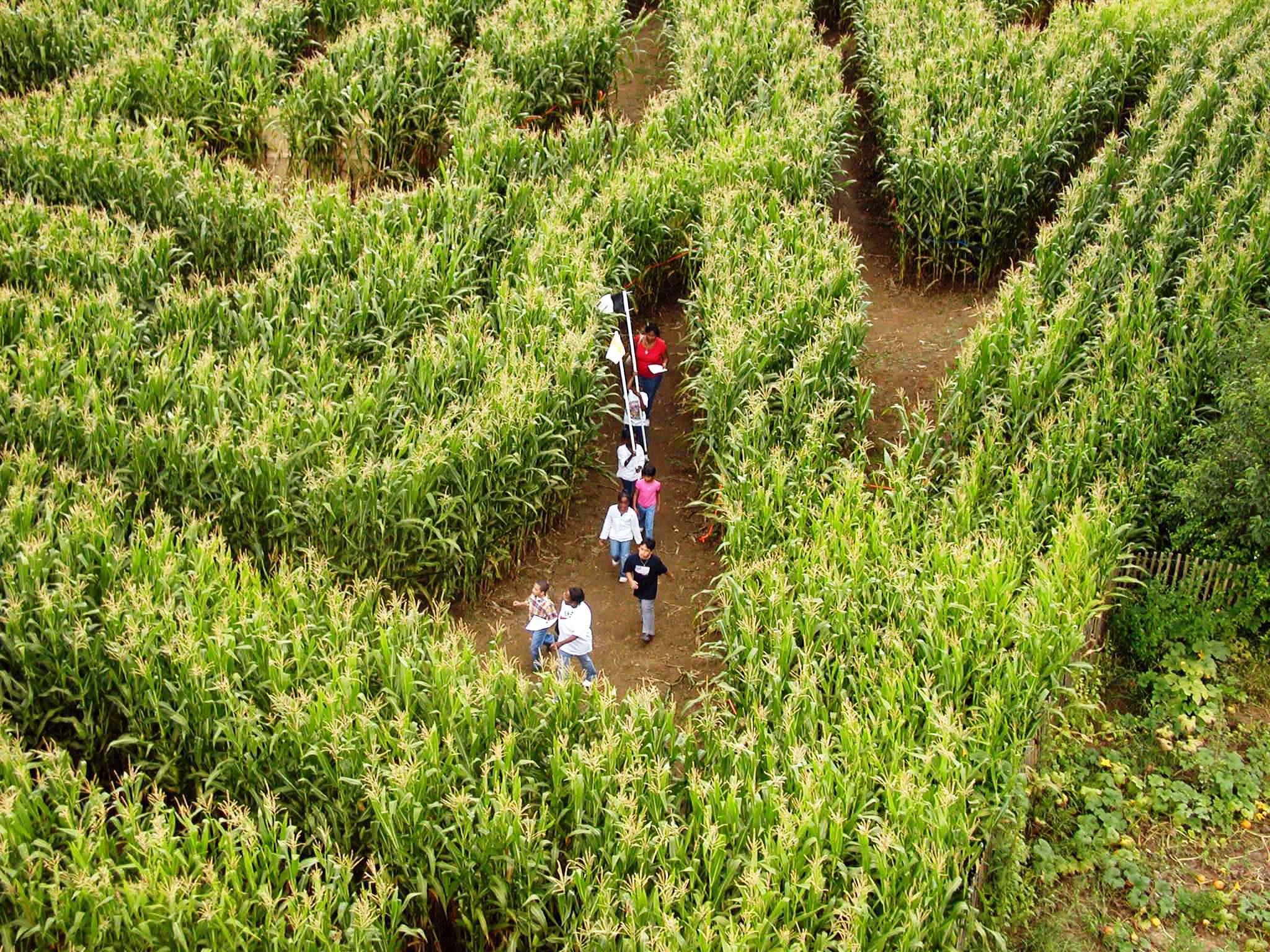 The Amazing Maize Maze at Queens County Farm Museum