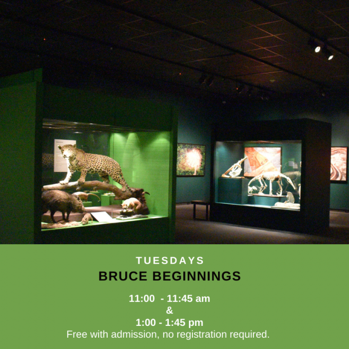 Bruce Beginnings: The Amazon Rainforest at Bruce Museum