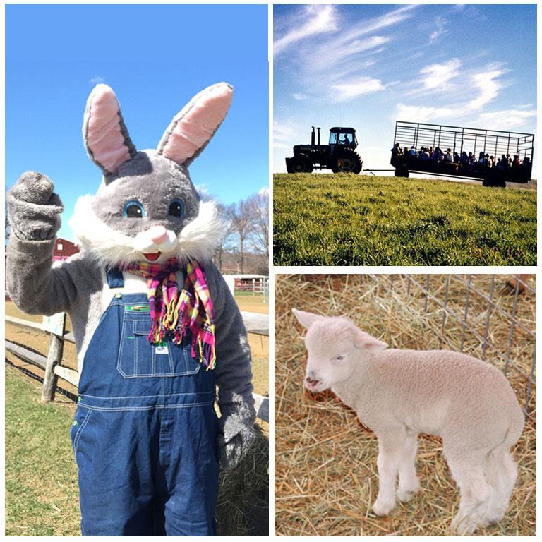IN PERSON Springtime & Easter Fun at Alstede Farms at Alstede Farms