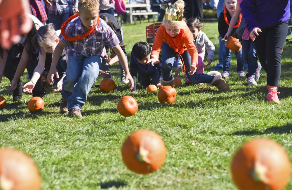 Pumpkin Harvest at Harbes Family Farm
