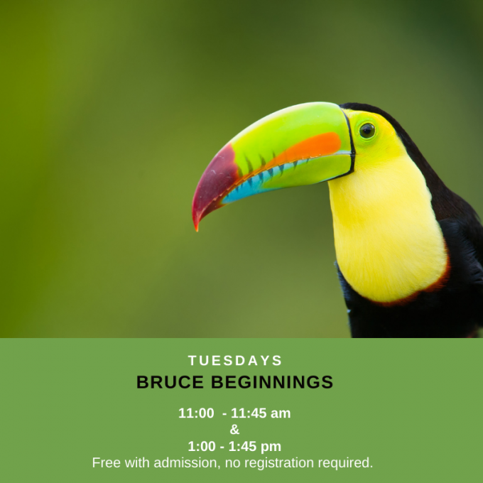 Bruce Beginnings: Birds in the Rainforest at Bruce Museum