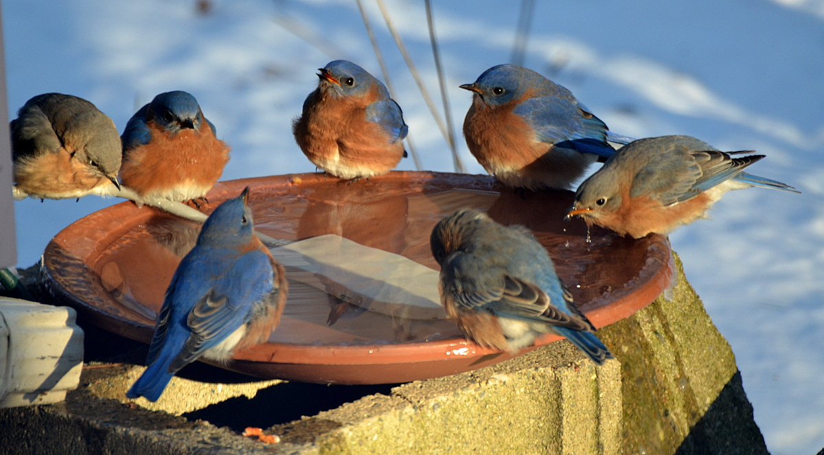 ONLINE Bird Feeders and Beyond at Greenwich Audubon Center