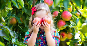 Apple Picking Orchards Near You!