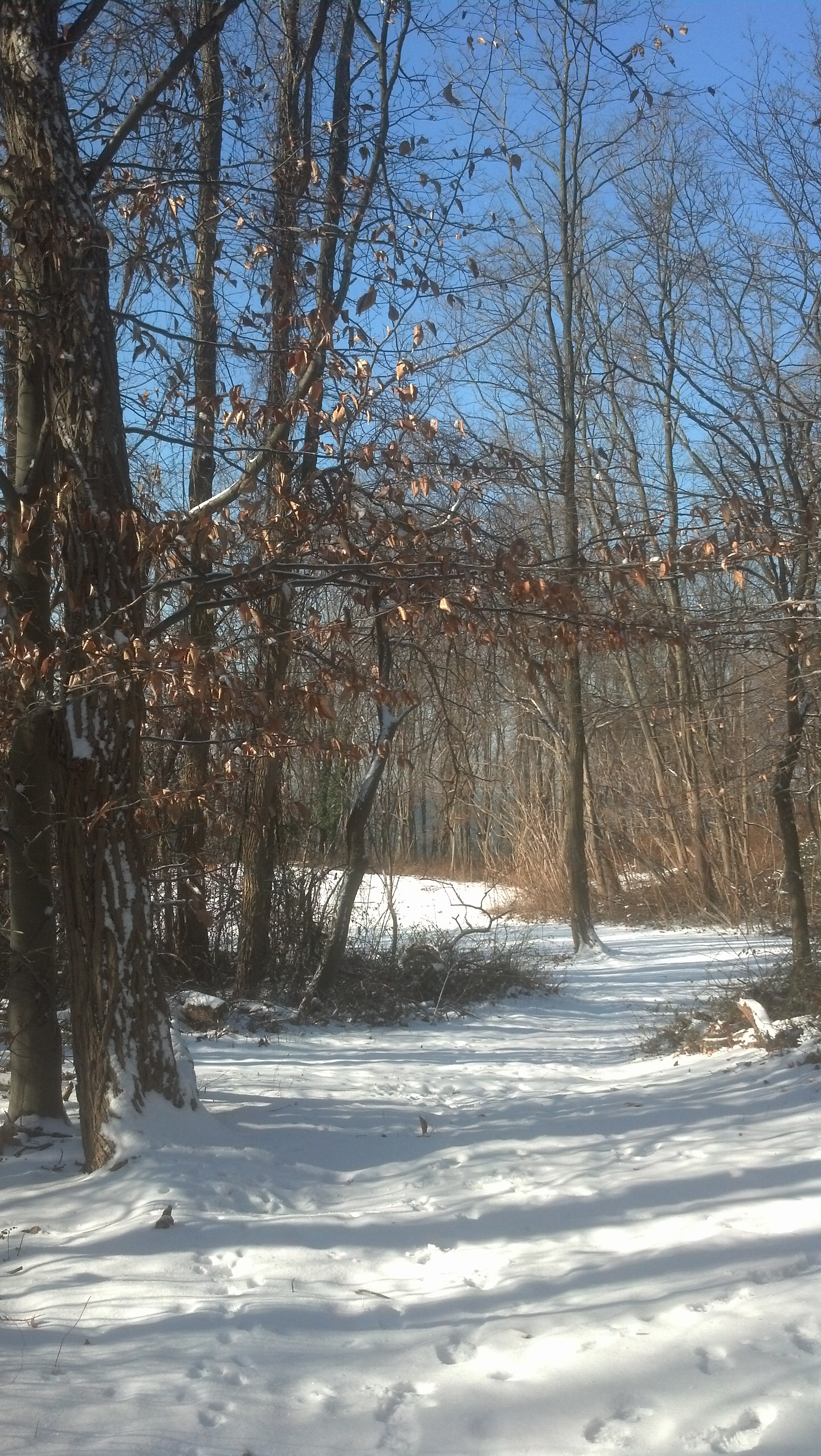 WOODLAND WINTER WALK at Garvies Point Museum and Preserve