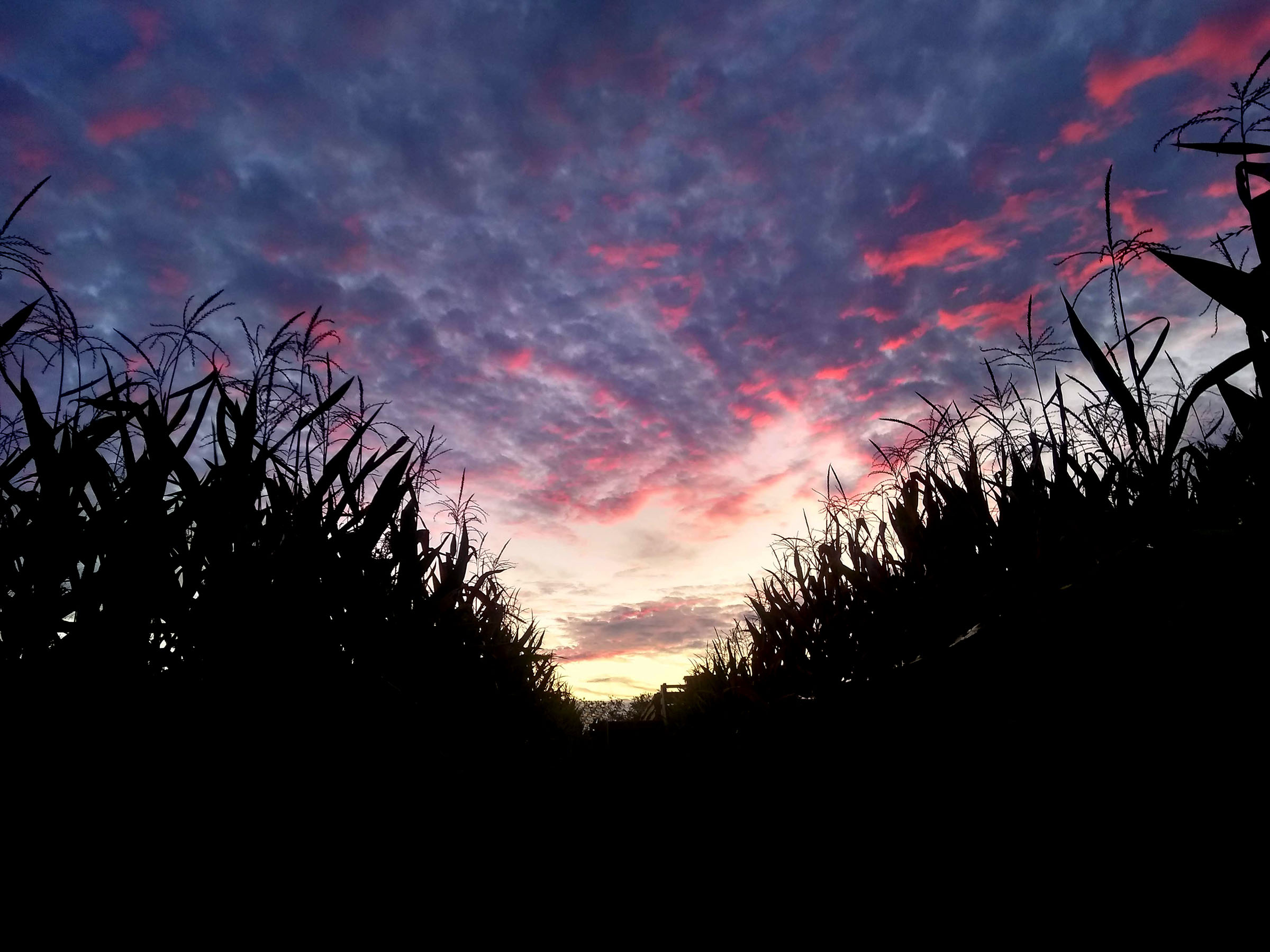 Maze by Moonlight at Queens County Farm Museum